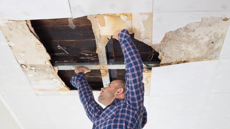Albertslund boliger renoveres for skimmelsvamp for 1,5 milliarder