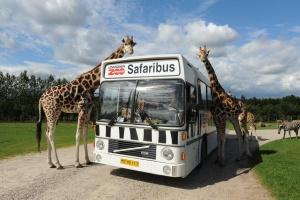 Givskud Zoo energirenoverer parken