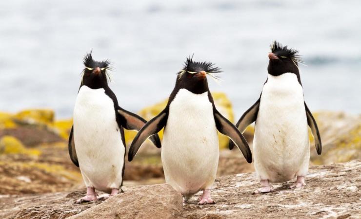 Kattegatcentret gør klar til pingviner
