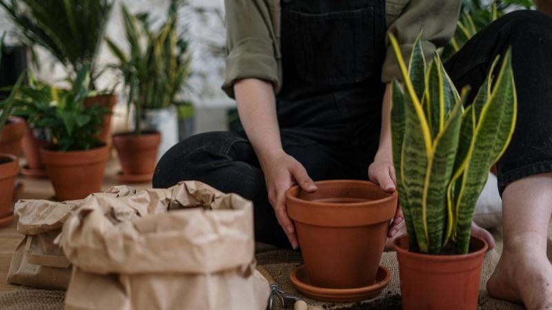 Få sunde planter og en flot have med pinjebark