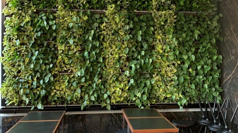 Biofilisk succes: Grønne vægge er i vækst